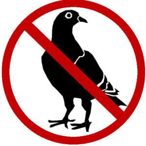 No Pigeon
